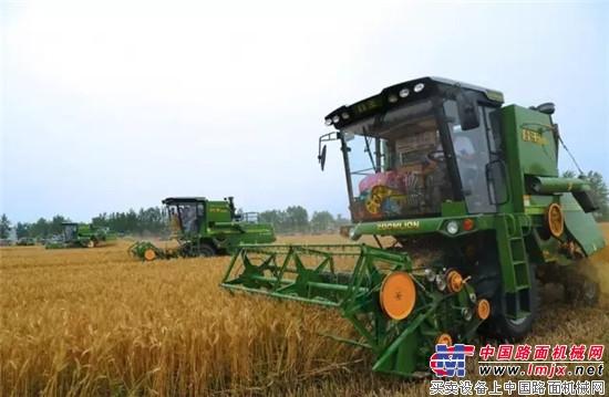 皖北地区农机手驾驶谷王小麦机进行大面积收获作业