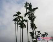 徐工高空作业车助力海南国际旅游岛建设纪实