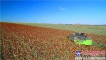 收小麦和杂粮,我为什么选择中联重科谷王TE90收割机
