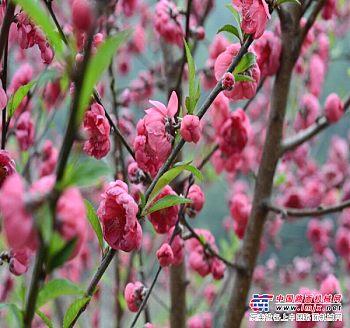 永春周边游,泉州实惠的周边游【荐】