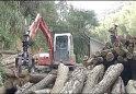 劲工抓木机产品施工视频
