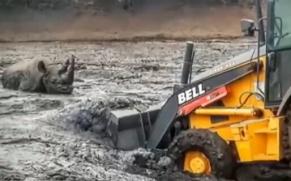 南非犀牛深陷泥潭 被装载机救出
