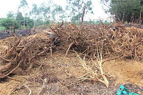 在北海农村山上用玉柴挖掘机挖树根