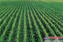 """雷沃重工:""""老外""""在中国的玉米地"""