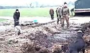 农场老鼠泛滥,老板带着狗狗开着挖掘机一锅端!