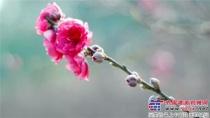 三月春风桃花红 桃乡汇聚凌宇情