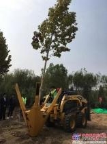 盖尔:一分钟挖一棵大树 苗木花卉全程机械化现场演示会举行