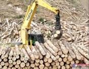 玉柴重工挖机配置抓木机 赢取海外新订单