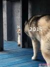 展望2019 | 凯斯伴您扬帆起航