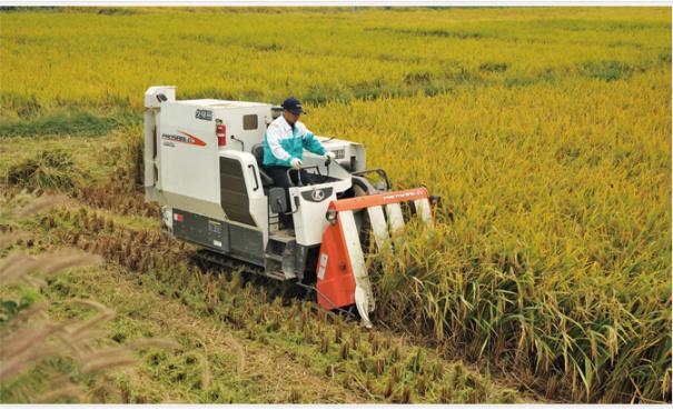 久保田农机4LBZ-145G玉米收获机